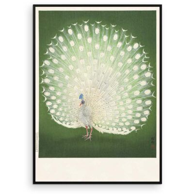 Plakat - Hvid Påfugl - Ohara Koson japansk træsnit - Aruhana