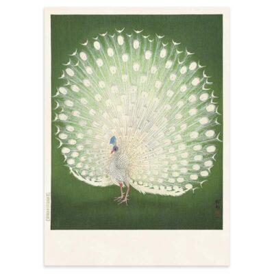 Plakat - Hvid Påfugl - Ohara Koson japansk træsnit - Aruhana - 50x70cm