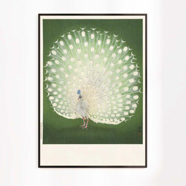 Hvid Påfugl - Plakat efter klassisk Japansk træsnit af Ohara Koson