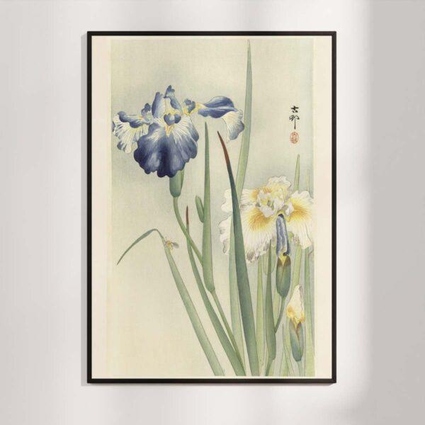Plakat - Japansk Træsnit - To iris i blomst af Ohara Koson