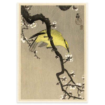 Plakat - Japansk Træsnit - Kinesisk Pirol på Blommegren 50x70cm