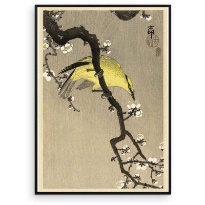 Plakat - Japansk Træsnit - Kinesisk Pirol på Blommegren - Aruhana