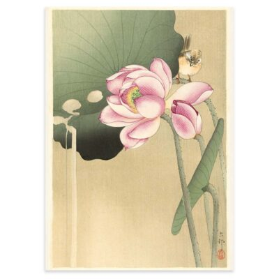 Plakat - Japansk Træsnit - Sangfugl og lotus - Ohara Koson 50x70cm