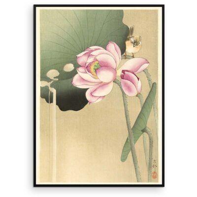 Plakat - Japansk Træsnit - Sangfugl og lotus - Ohara Koson - Aruhana