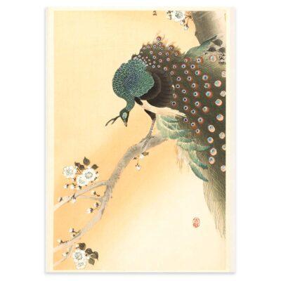 Plakat - Japansk Træsnit - Påfugl i kirsebærtræ - Ohara Koson 50x70cm