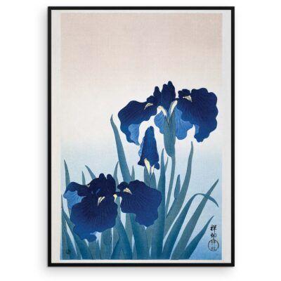 Plakat - Iris i blomst - Ohara Koson Japansk Træsnit - Aruhana