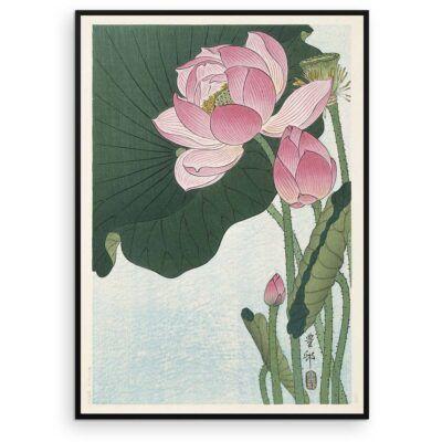 Plakat - Blomstrende Lotus - Ohara Koson Japansk Træsnit - Aruhana