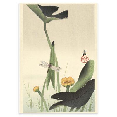 Plakat - Japansk træsnit - Guldsmed og lotus - Ohara Koson 50x70cm