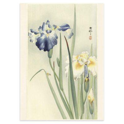 Plakat - Japansk Træsnit - To iris i blomst af Ohara Koson 50x70cm
