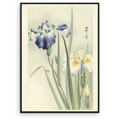 Plakat - Japansk Træsnit - To iris i blomst af Ohara Koson - Aruhana