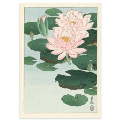 Plakat - Blomstrende Åkander - Ohara Koson Japansk Træsnit 50x70cm