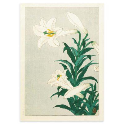 Plakat - Liljer - Japansk Træsnit af Ohara Koson 50x70cm
