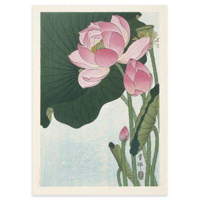 Plakat - Blomstrende Lotus - Ohara Koson Japansk Træsnit 50x70cm