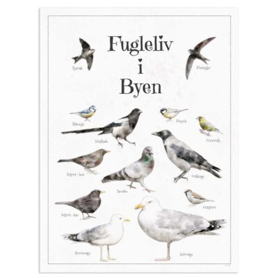 Fugleplakat - Plakat med Fugleliv i Byen - 30x40cm Aruhana