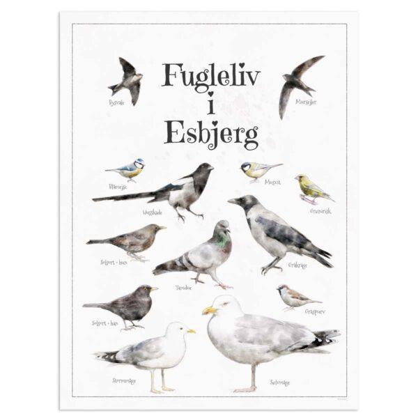 Fugleplakat - Plakat med Fugleliv i Esbjerg - 30x40cm Aruhana