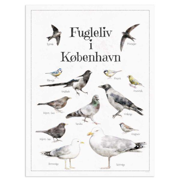 Fugleplakat - Plakat med Fugleliv i København - 30x40cm Aruhana