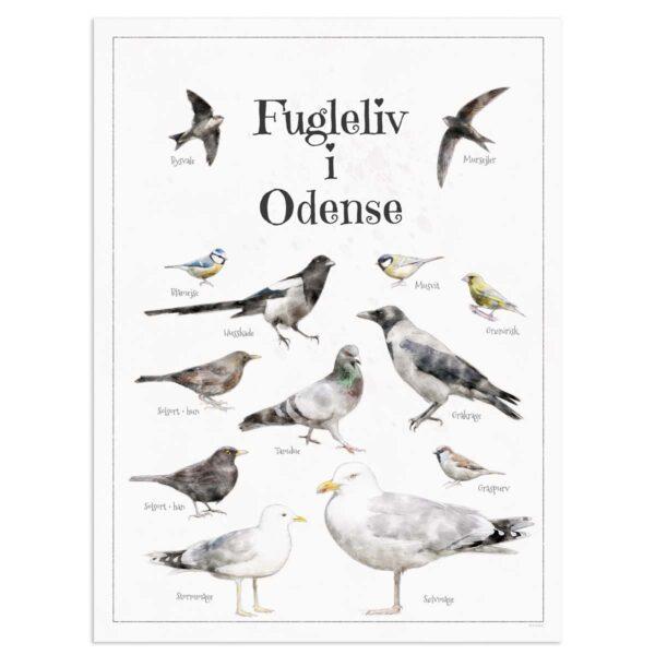 Fugleplakat - Plakat med Fugleliv i Odense - 30x40cm Aruhana