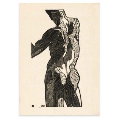Plakat - Anatomisk træsnit - Studie af en mands ryg- og glutes-muskler 50x70cm