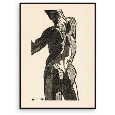 Plakat - Anatomisk træsnit - Studie af en mands ryg- og glutes-muskler - Aruhana