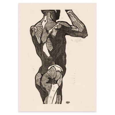 Plakat - Anatomisk træsnit - Studie af en stående mands ryg og glutes-muskler 50x70cm
