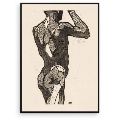 Plakat - Anatomisk træsnit - Studie af en stående mands ryg og glutes-muskler - Aruhana
