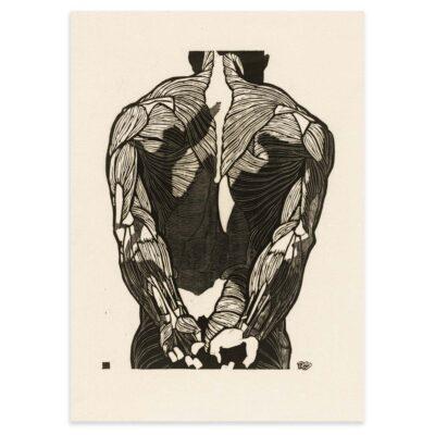 Plakat - Anatomisk træsnit - Studie af en mands ryg og arme 50x70cm