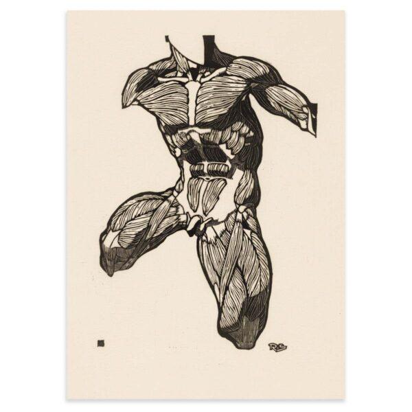 Plakat - Anatomisk træsnit - Studie af en mands torso, hals og lårmuskler 50x70cm