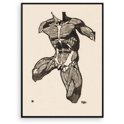 Plakat - Anatomisk træsnit - Studie af en mands torso, hals og lårmuskler - Aruhana