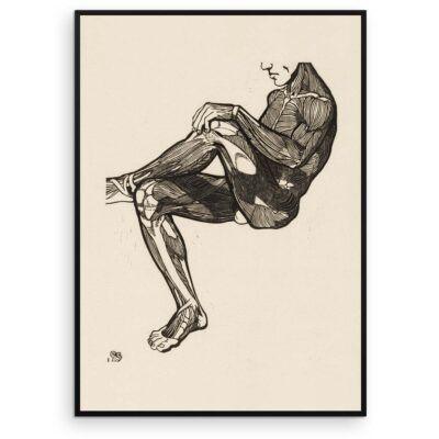 Plakat - Anatomisk træsnit - Studie af en mands ben- og armmuskler - Aruhana