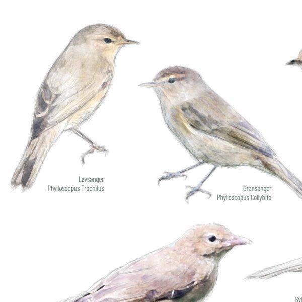 Fugleplakat - Fugle i den vilde have - Detalje - 50x70