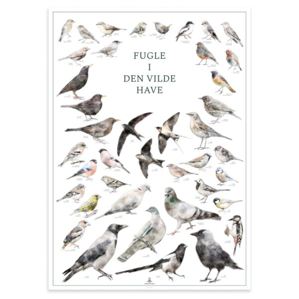 Fugleplakat - Fugle i den vilde have - Original plakat med havens fugle 50x70cm