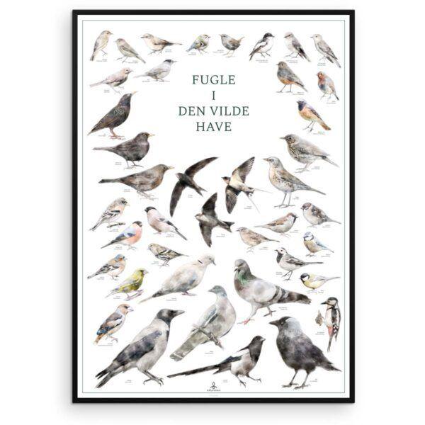 Fugleplakat - Fugle i den vilde have - Original plakat med havens fugle - Aruhana
