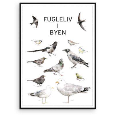 Fugleplakat - Plakat med Fugleliv i byen - Aruhana