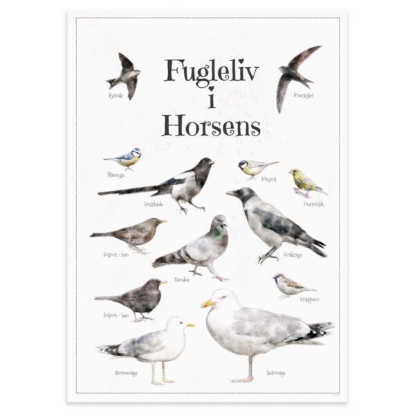 Fugleplakat - Plakat med Fugleliv i Horsens - B2 50x70cm Aruhana