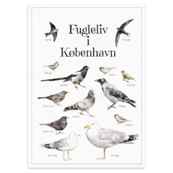 Fugleplakat - Plakat med Fugleliv i København - B2 50x70cm Aruhana