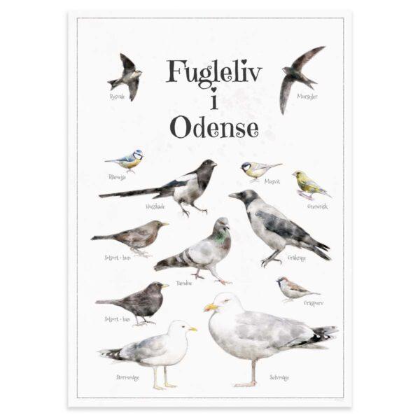 Fugleplakat - Plakat med Fugleliv i Odense - B2 50x70cm Aruhana