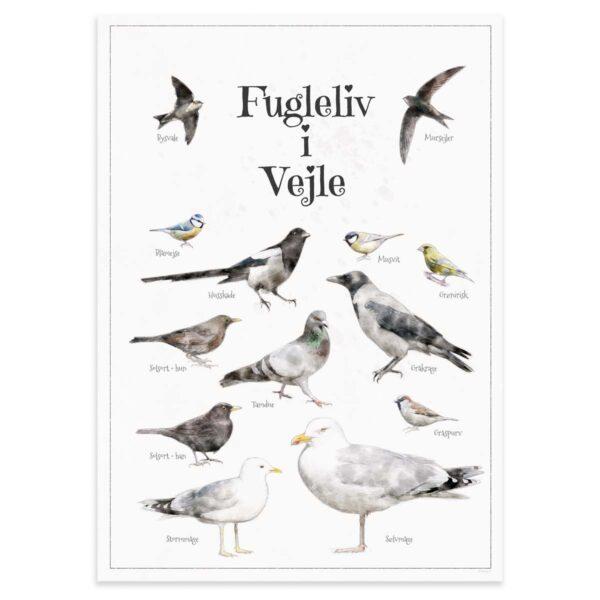 Fugleplakat - Plakat med Fugleliv i Vejle - B2 50x70cm Aruhana