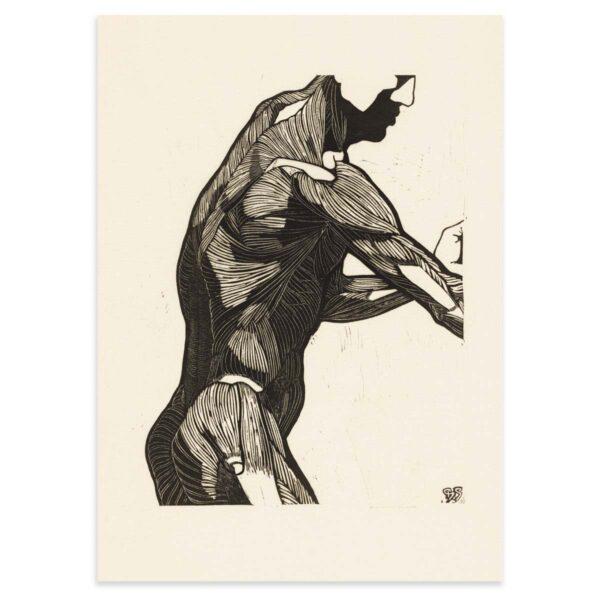 Plakat - Anatomisk træsnit - Studie af en mands ryg og armmuskler 50x70cm
