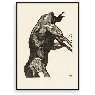 Plakat - Anatomisk træsnit - Studie af en mands ryg og armmuskler - Aruhana