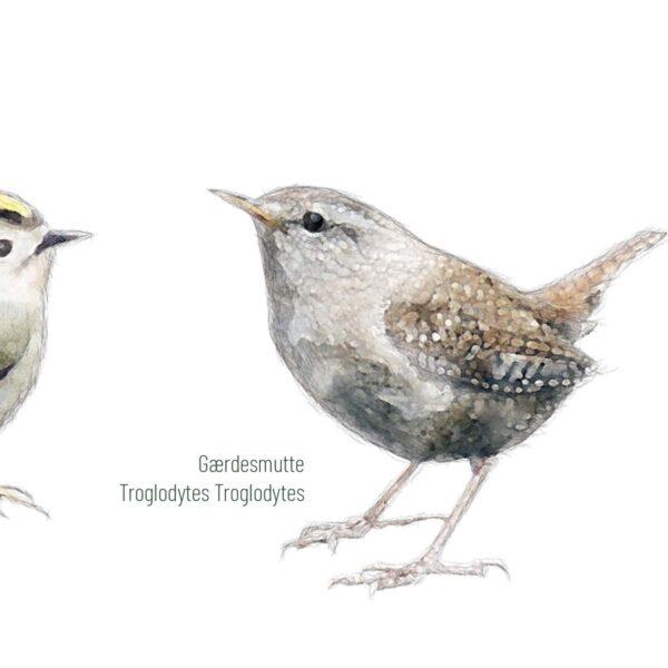 Fugleplakat - Fugle i den vilde have - Detalje - 70x100