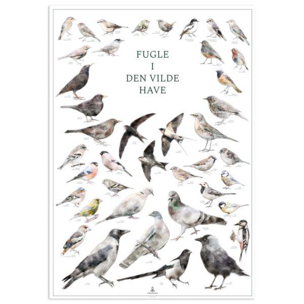 Fugleplakat - Fugle i den vilde have - Original plakat med havens fugle 70x100cm