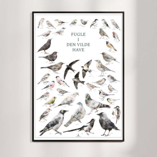Fugleplakat - Fugle i den vilde have - Original plakat med havens fugle