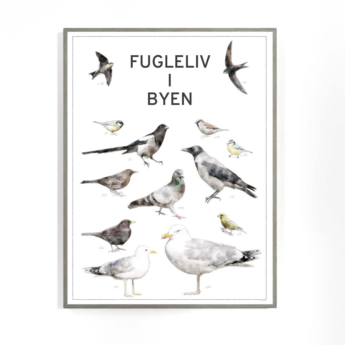Fugleplakat - Plakat med Fugleliv i byen - 30x40cm version 2