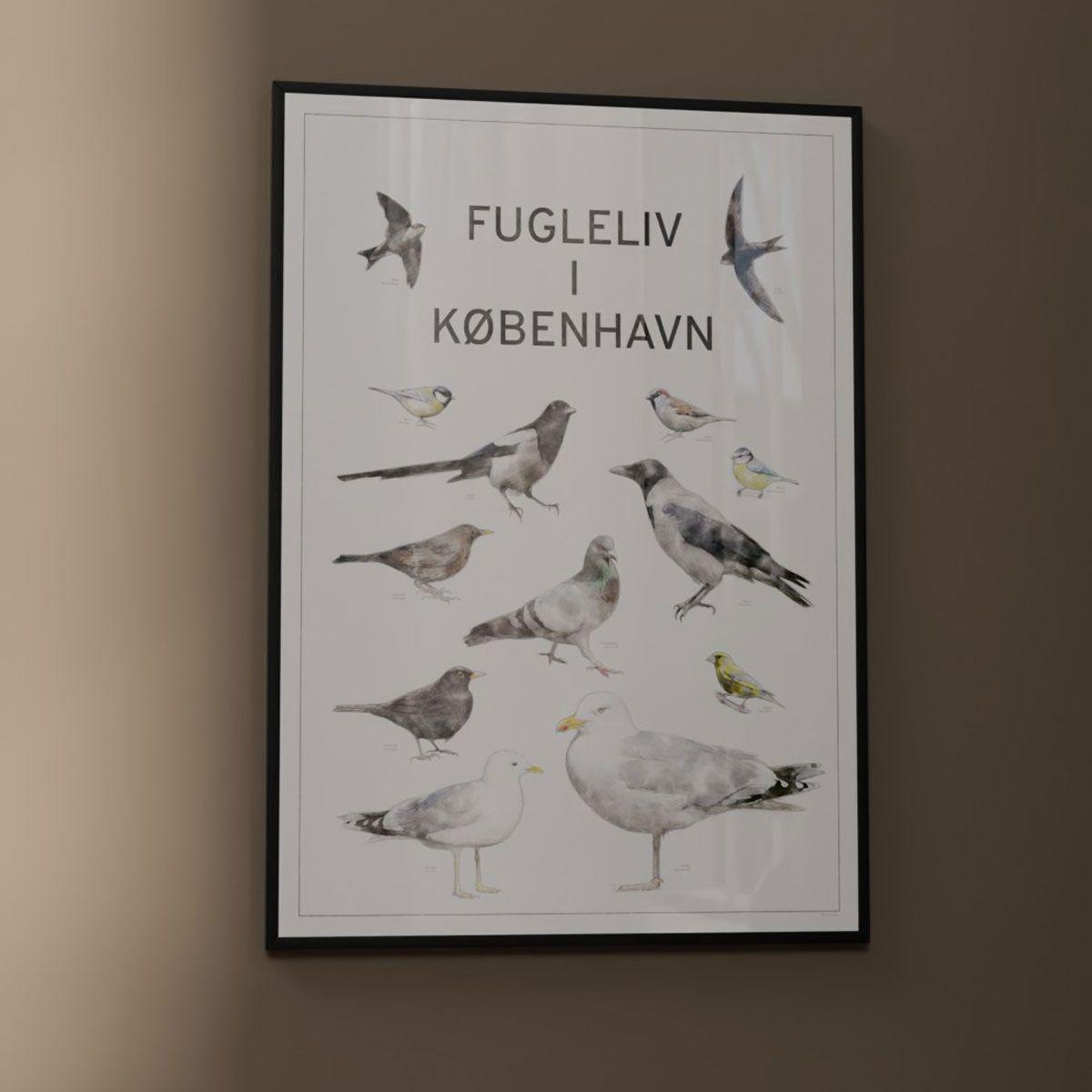 Fugleplakat - Plakat med Fugleliv i byen - 50x70cm version 2