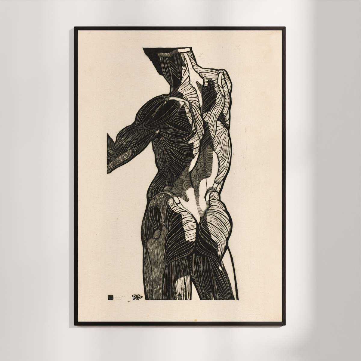 Plakat - Anatomisk træsnit - Studie af en mands ryg- og glutes-muskler
