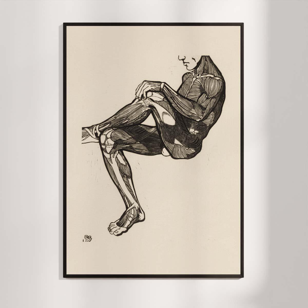 Plakat - Anatomisk træsnit - Studie af en mands ben- og armmuskler