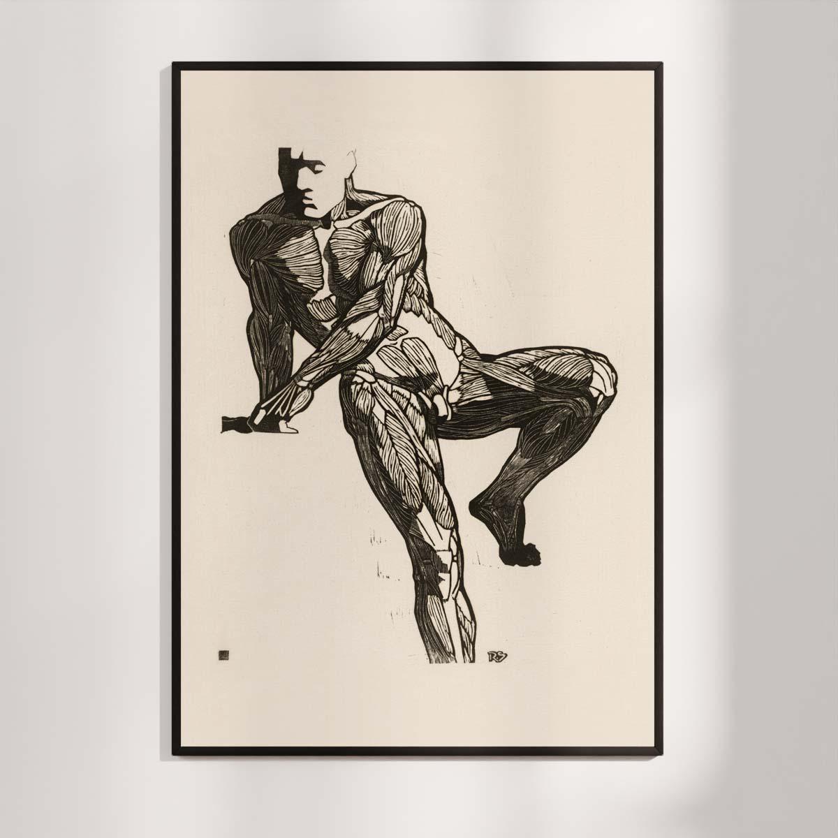 Plakat - Anatomisk træsnit - Studie af en mands bryst-, mave- og lårmuskler
