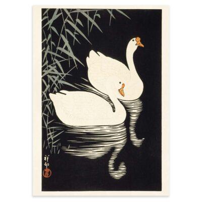 Hvide svane-gæs og siv - Ohara Koson træsnit 1928 -50x70cm