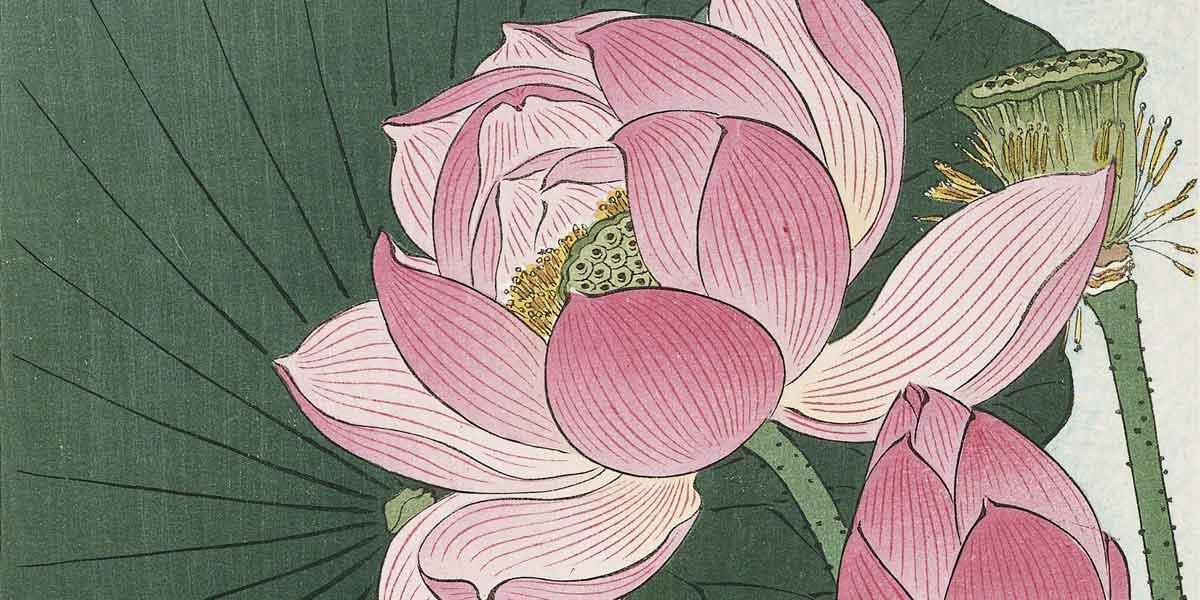 Ohara Koson - Blomstrende Lotus - Træsnit, ca. 1930